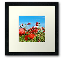 Poppies No.2 Framed Print