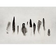Feather Study no. 3 Photographic Print