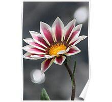 Purple & White Flower Poster