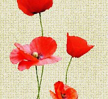 Poppy Days by Christine Lake
