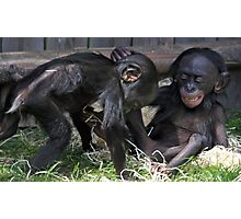 playful baby chimps  Photographic Print