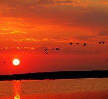 Early Morning Sunrise over Oak Hammock Marsh... by Larry Trupp