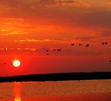 Early Morning Sunrise over Oak Hammock Marsh... by Larry Trupp