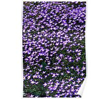 A CARPET OF BLUETS (Thyme-Leaved Bluets) Poster