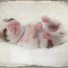 Puppy love... by Yool