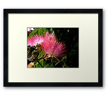 All Fluff & Feathers Framed Print