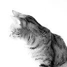 High key Bengal Cat Portrait by Stephen Orsillo