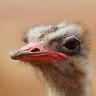 I know, I am beautiful. by Barbara  Glover