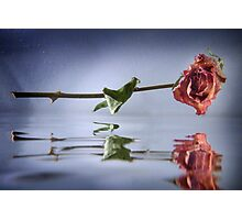 Floating Rose Photographic Print