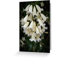 White bells Leith Park Victoria 20150916 0360     These cover the arches over the pathway to the community hall  Greeting Card