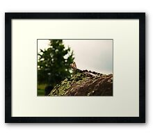 Spring Pole Drill (Petrolia Discovery) Framed Print