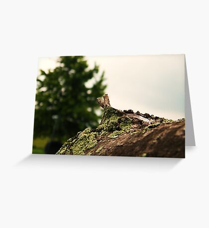 Spring Pole Drill (Petrolia Discovery) Greeting Card