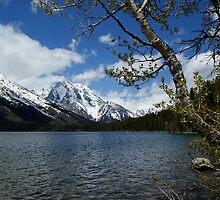Jenny Lake by Farhad Aziz