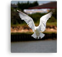 I want to  be an Eagle  Canvas Print