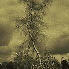 The Birch by Mitch Labuda