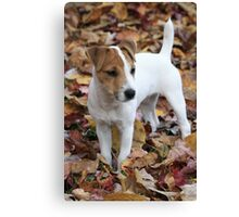Jack In The Leaves Canvas Print