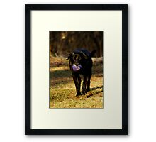 All Lab Framed Print