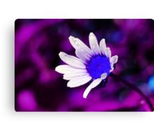 Purple Blue Daisy Canvas Print