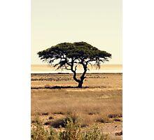 Deserted Tree II Photographic Print