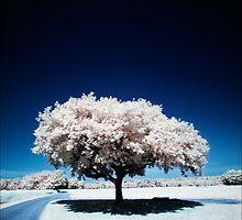 Tree (IR) II by PaulBradley