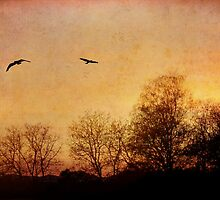 Sunset at Eichberg by Rosy Kueng