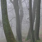 Tree trunks in the mist by Jane Corey