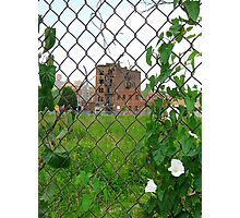 Bronx Beauties Photographic Print