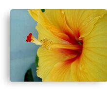 ELECTRIC HIBISCUS Canvas Print