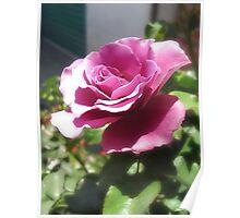 Rosas Moradas 4 Poster