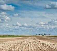 Wheat Farm in the Spring by mylitleye