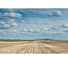 Wheat Farm in the Spring Photographic Print