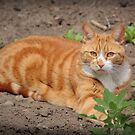 Ginger in the Garden by BCkat