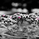 Liquid Flower XVI by EbelArt