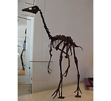 Super Ornithomimus Photographic Print