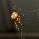 Spider's Web by Lin Taylor