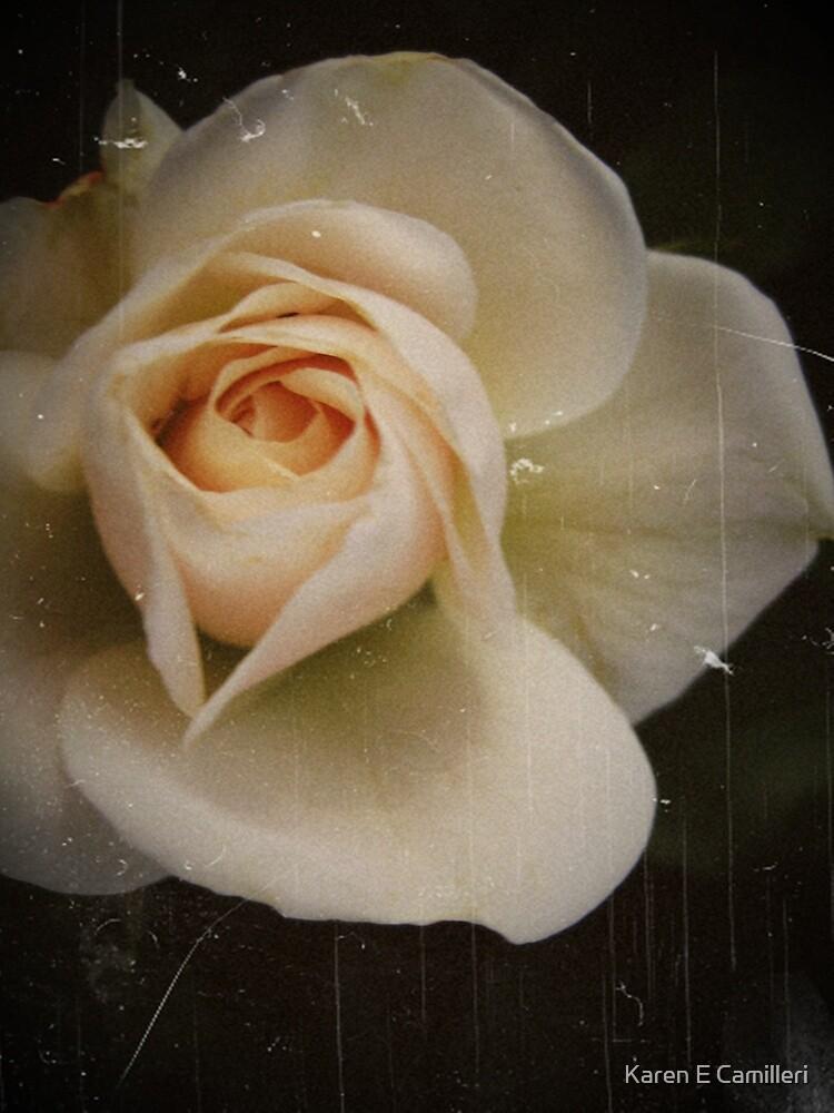 Antique Rose by Karen E Camilleri