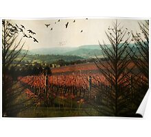 Autumn in the Vines Poster