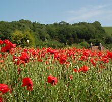 Alkham Poppies by FelicityB