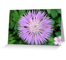 Knapweed (Centaurea) Greeting Card