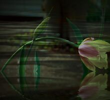 Tulip Immersed by Elaine Teague