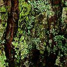 Tree Canvas by Jeannette Sheehy