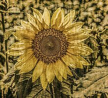 Sunflower Antique by Susan Nixon