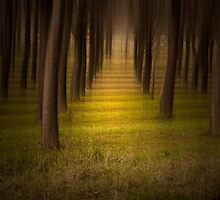 Light in the Forest by Ivan Kemp