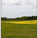 Kugures Canola, Saldus, Latvia. (2009) by Madeleine Marx-Bentley