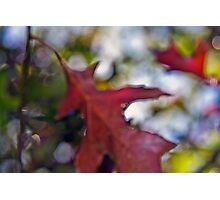 Autumn delight #13 Photographic Print