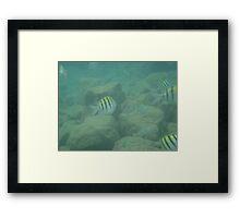 Puerto Rico Fish Framed Print