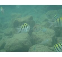 Puerto Rico Fish Photographic Print