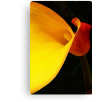 Zantedeschia! Canvas Print