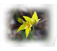 Cowslip  Poster