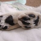 Chloe's Paws by down23
